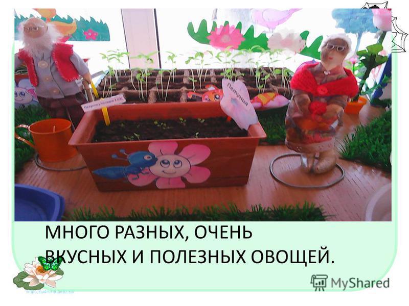http://ku4mina.ucoz.ru/ МНОГО РАЗНЫХ, ОЧЕНЬ ВКУСНЫХ И ПОЛЕЗНЫХ ОВОЩЕЙ.