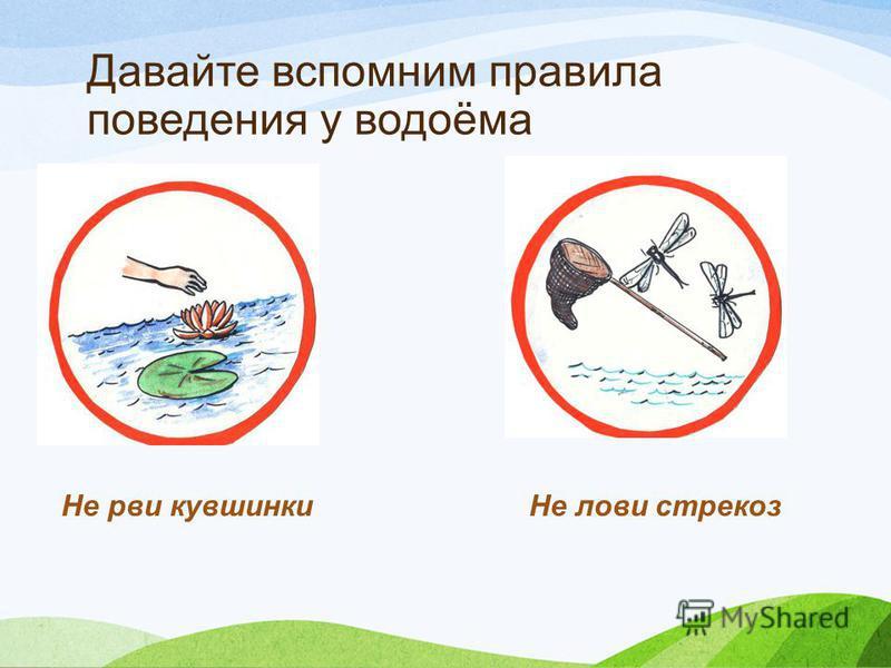 Давайте вспомним правила поведения у водоёма Не рви кувшинки Не лови стрекоз