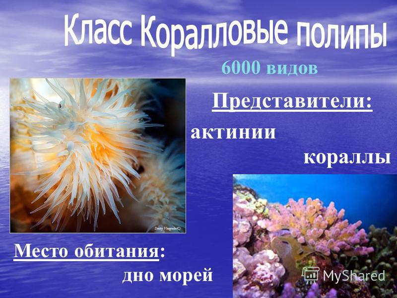 Представители: 6000 видов Место обитания: дно морей актинии кораллы