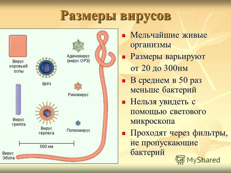 Размеры вирусов Мельчайшие живые организмы Мельчайшие живые организмы Размеры варьируют Размеры варьируют от 20 до 300 нм от 20 до 300 нм В среднем в 50 раз меньше бактерий В среднем в 50 раз меньше бактерий Нельзя увидеть с помощью светового микроск