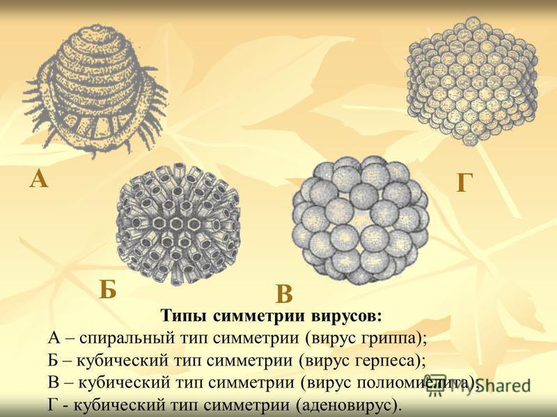 Типы симметрии вирусов: А – спиральный тип симметрии (вирус гриппа); Б – кубический тип симметрии (вирус герпеса); В – кубический тип симметрии (вирус полиомиелита); Г - кубический тип симметрии (аденовирус). А Б В Г