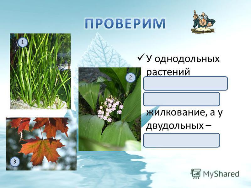 У однодольных растений параллельное (1) или дуговое (2) жилкование, а у двудольных – сетчатое (3). 3 1 2