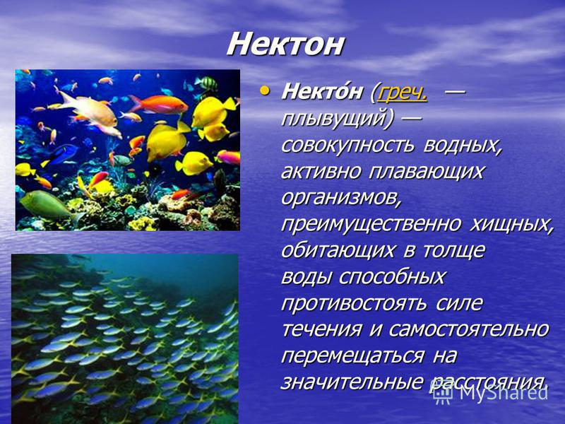 Нектон Некто́н (греч. плывущий) совокупность водных, активно плавающих организмов, преимущественно хищных, обитающих в толще воды способных противостоять силе течения и самостоятельно перемещаться на значительные расстояния. Некто́н (греч. плывущий)