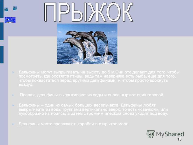 Дельфины могут выпрыгивать на высоту до 5 м.Они это делают для того, чтобы посмотреть, где охотятся птицы, ведь там наверняка есть рыба, ещё для того, чтобы похвастаться перед другими дельфинами, и чтобы просто вдохнуть воздух. Плавая, дельфины выпры