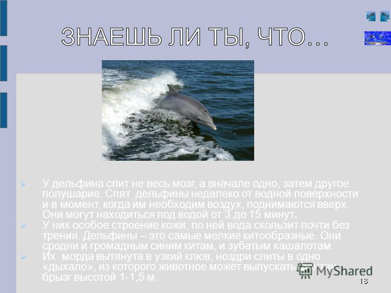 У дельфина спит не весь мозг, а вначале одно, затем другое полушарие. Спят дельфины недалеко от водной поверхности и в момент, когда им необходим воздух, поднимаются вверх. Они могут находиться под водой от 3 до 15 минут. У них особое строение кожи,