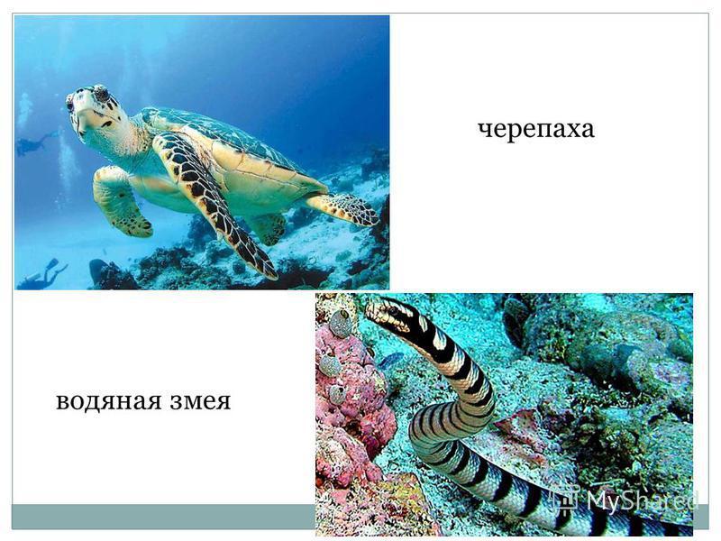 черепаха водяная змея