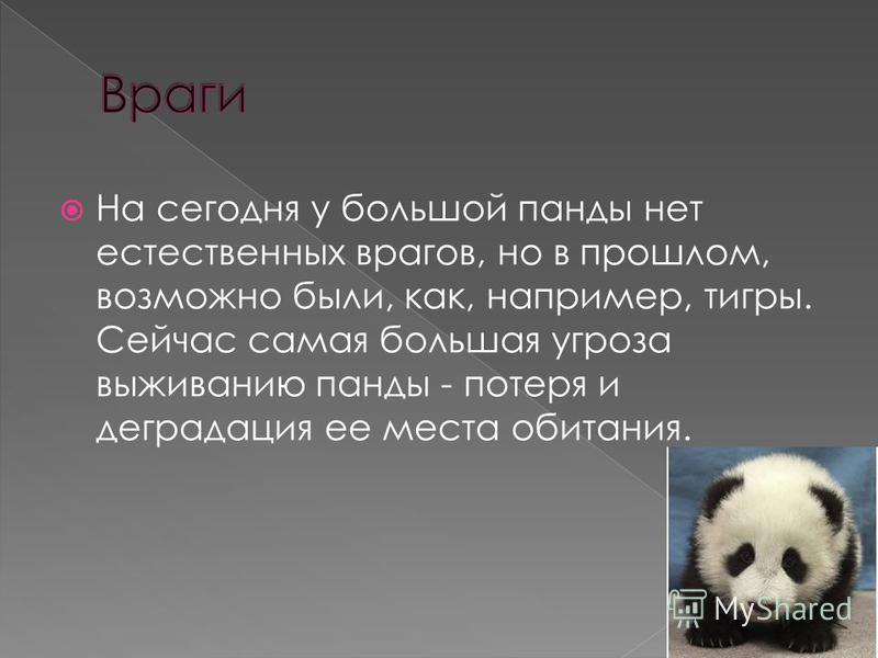 На сегодня у большой панды нет естественных врагов, но в прошлом, возможно были, как, например, тигры. Сейчас самая большая угроза выживанию панды - потеря и деградация ее места обитания.