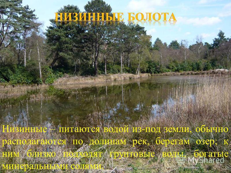 Низинные – питаются водой из - под земли, обычно располагаются по долинам рек, берегам озер ; к ним близко подходят грунтовые воды, богатые минеральными солями. ).