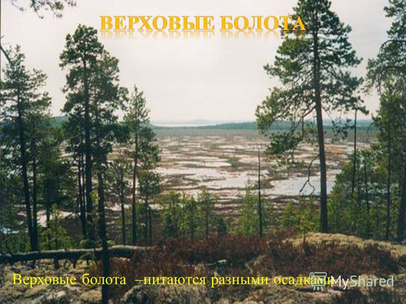 Верховые болота – питаются разными осадками.