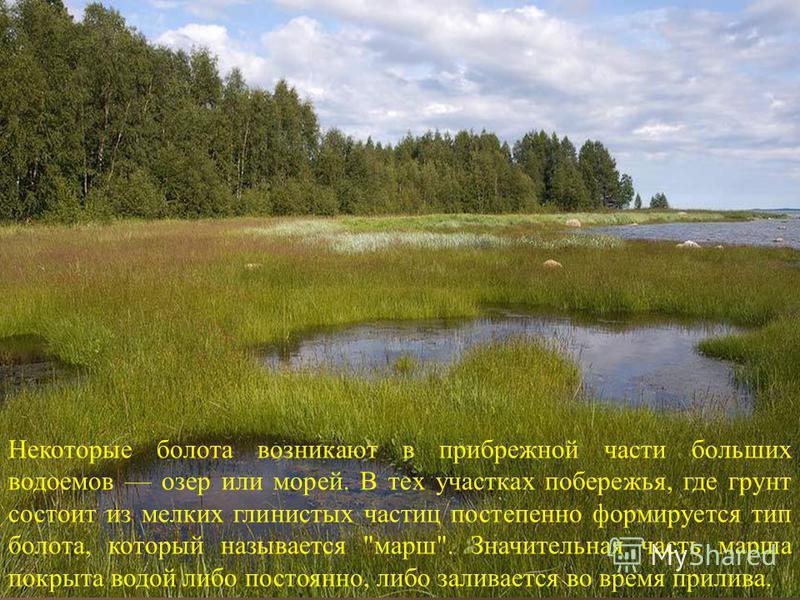Некоторые болота возникают в прибрежной части больших водоемов озер или морей. В тех участках побережья, где грунт состоит из мелких глинистых частиц постепенно формируется тип болота, который называется