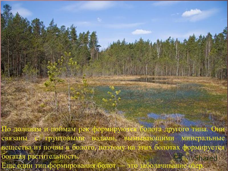 По долинам и поймам рек формируются болота другого типа. Они связаны с грунтовыми водами, вымывающими минеральные вещества из почвы в болото, поэтому на этих болотах формируется богатая растительность. Еще один тип формирования болот это заболачивани