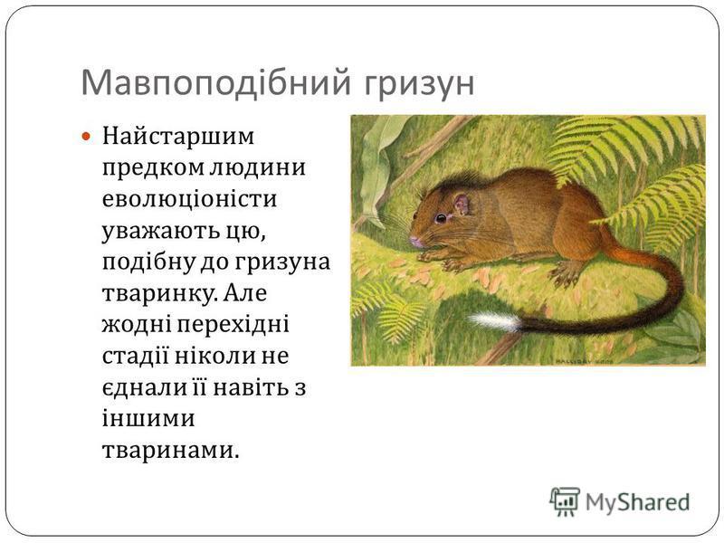 Мавпоподібний гризун Найстаршим предком людини еволюціоністи уважають цю, подібну до гризуна тваринку. Але жодні перехідні стадії ніколи не єднали її навіть з іншими тваринами.