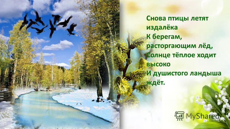 Снова птицы летят издалёка К берегам, расторгающим лёд, Солнце тёплое ходит высоко И душистого ландыша ждёт.