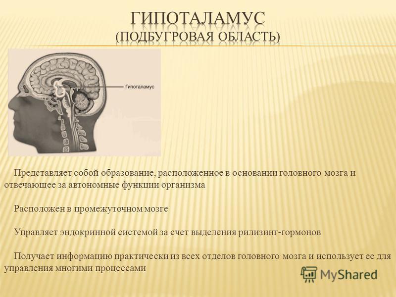 Представляет собой образование, расположенное в основании головного мозга и отвечающее за автономные функции организма Расположен в промежуточном мозге Управляет эндокринной системой за счет выделения рилизинг-гормонов Получает информацию практически