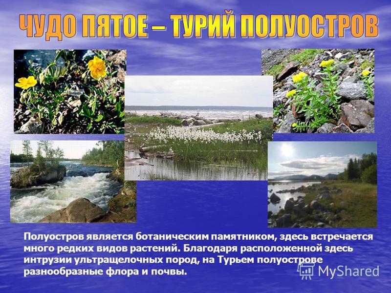 Полуостров является ботаническим памятником, здесь встречается много редких видов растений. Благодаря расположенной здесь интрузии ультра щелочных пород, на Турьем полуострове разнообразные флора и почвы.