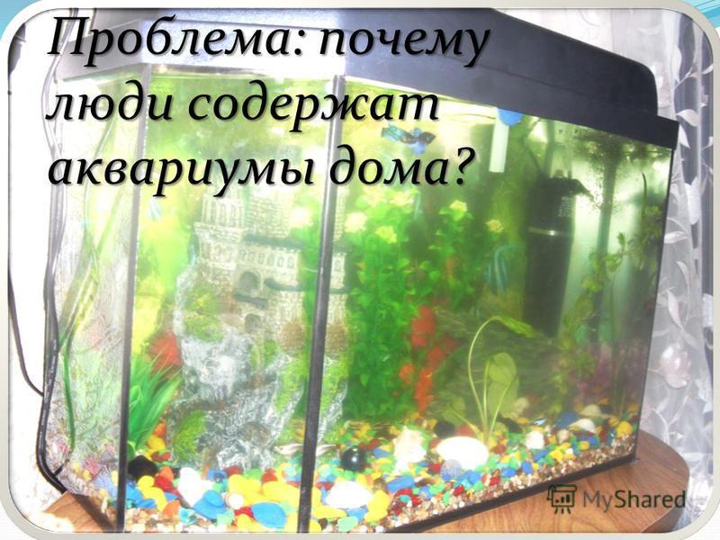 аквариум презентация как создавать 3 класс