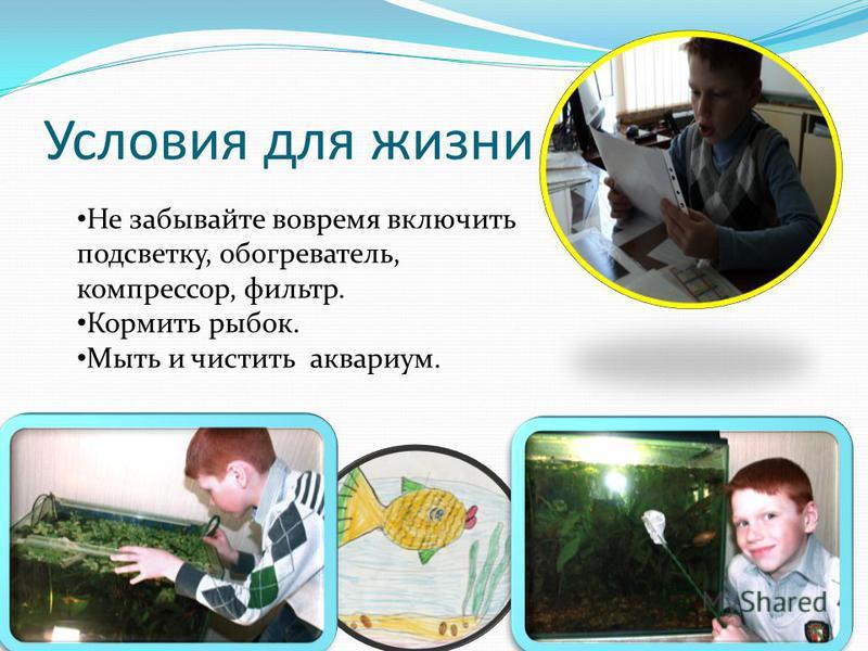 Условия для жизни Не забывайте вовремя включить подсветку, обогреватель, компрессор, фильтр. Кормить рыбок. Мыть и чистить аквариум.