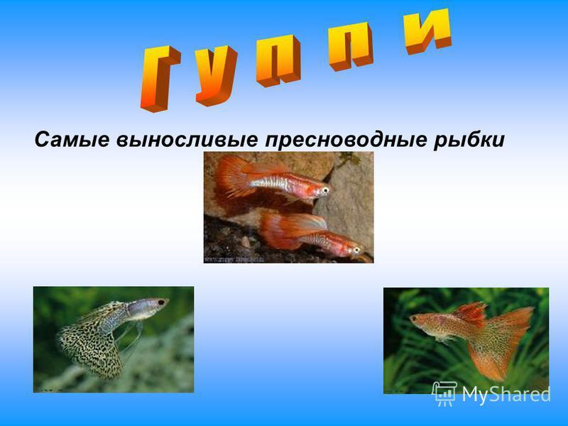 Самые выносливые пресноводные рыбки
