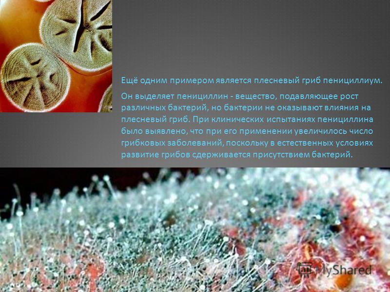 Ещё одним примером является плесневый гриб пенициллиум. Он выделяет пенициллин - вещество, подавляющее рост различных бактерий, но бактерии не оказывают влияния на плесневый гриб. При клинических испытаниях пенициллина было выявлено, что при его прим