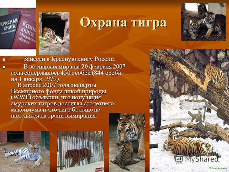 Охрана тигра Охрана тигра Занесен в Красную книгу России. Занесен в Красную книгу России. В зоопарках мира на 20 февраля 2007 года содержалось 450 особей (844 особи на 1 января 1979). В апреле 2007 года эксперты Всемирного фонда дикой природы (WWF) о