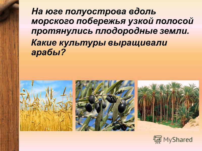 На юге полуострова вдоль морского побережья узкой полосой протянулись плодородные земли. Какие культуры выращивали арабы?