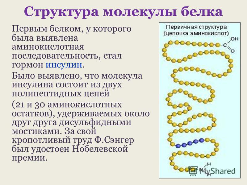 Структура молекулы белка Первым белком, у которого была выявлена аминокислотная последовательность, стал гормон инсулин. Было выявлено, что молекула инсулина состоит из двух полипептидных цепей (21 и 30 аминокислотных остатков), удерживаемых около др