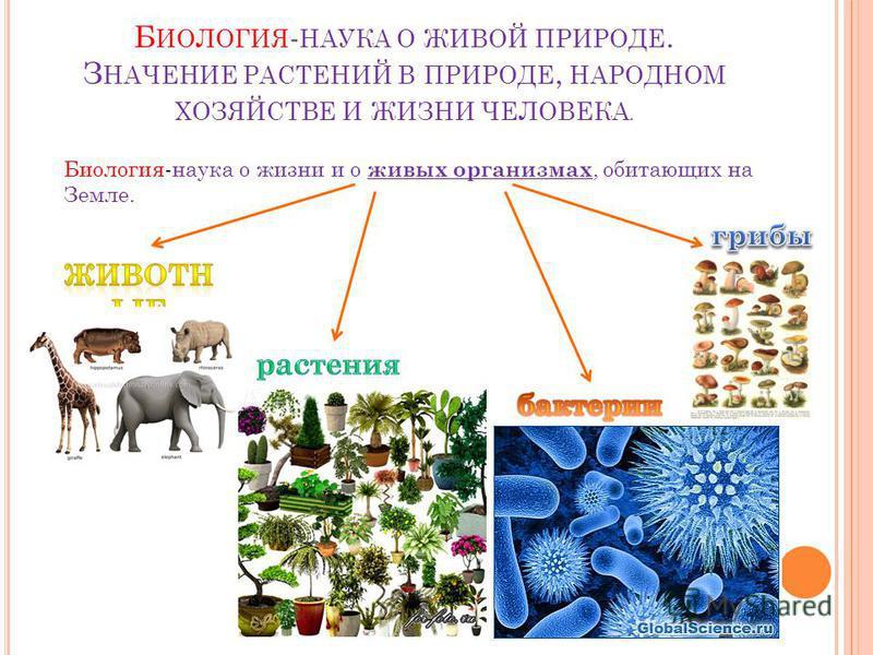 Б ИОЛОГИЯ - НАУКА О ЖИВОЙ ПРИРОДЕ. З НАЧЕНИЕ РАСТЕНИЙ В ПРИРОДЕ, НАРОДНОМ ХОЗЯЙСТВЕ И ЖИЗНИ ЧЕЛОВЕКА. Биология-наука о жизни и о живых организмах, обитающих на Земле.