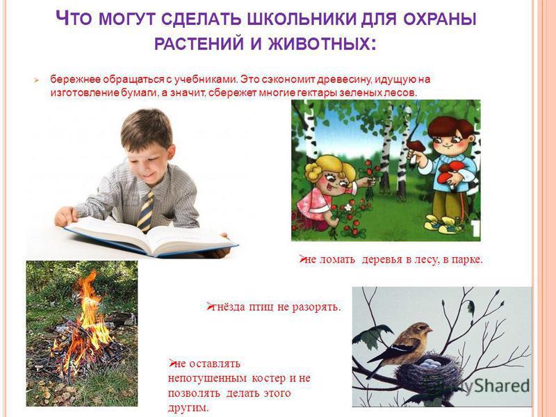 Ч ТО МОГУТ СДЕЛАТЬ ШКОЛЬНИКИ ДЛЯ ОХРАНЫ РАСТЕНИЙ И ЖИВОТНЫХ : бережнее обращаться с учебниками. Это сэкономит древесину, идущую на изготовление бумаги, а значит, сбережет многие гектары зеленых лесов. не ломать деревья в лесу, в парке. не оставлять н