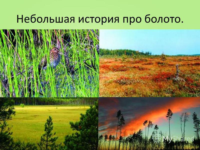 Небольшая история про болото.