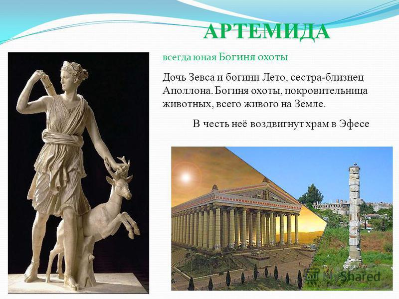 АРТЕМИДА всегда юная Богиня охоты Дочь Зевса и богини Лето, сестра-близнец Аполлона. Богиня охоты, покровительница животных, всего живого на Земле. В честь неё воздвигнут храм в Эфесе