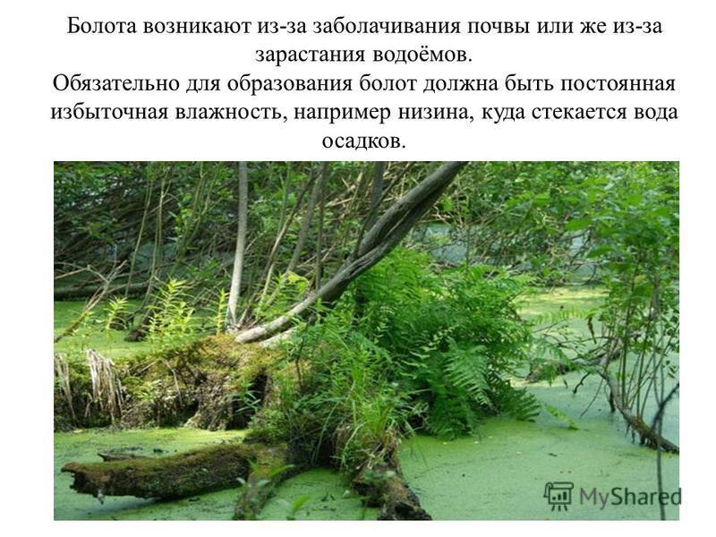 Болота возникают из-за заболачивания почвы или же из-за зарастания водоёмов. Обязательно для образования болот должна быть постоянная избыточная влажность, например низина, куда стекается вода осадков.