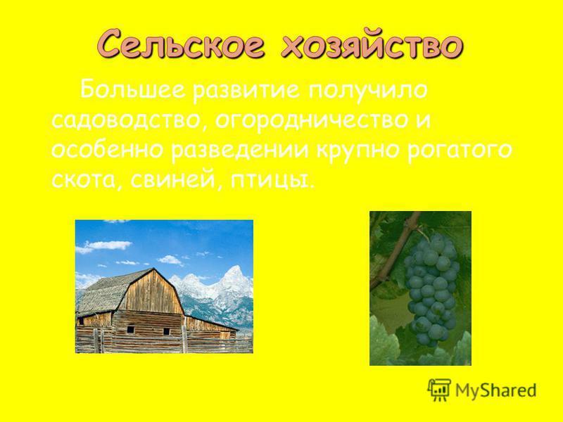 Большее развитие получило садоводство, огородничество и особенно разведении крупно рогатого скота, свиней, птицы.
