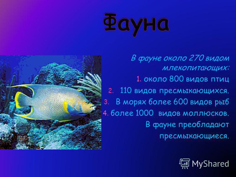 В фауне около 270 видом млекопитающих: 1. около 800 видов птиц 2. 110 видов пресмыкающихся. 3. В морях более 600 видов рыб 4. более 1000 видов моллюсков. В фауне преобладают пресмыкающиеся.