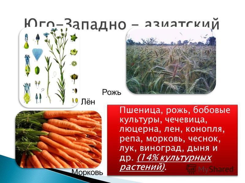 Пшеница, рожь, бобовые культуры, чечевица, люцерна, лен, конопля, репа, морковь, чеснок, лук, виноград, дыня и др. (14% культурных растений). Рожь Лён Морковь