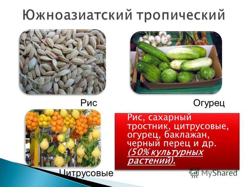 Рис, сахарный тростник, цитрусовые, огурец, баклажан, черный перец и др. (50% культурных растений). Рис Огурец Цитрусовые
