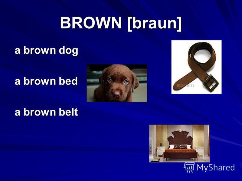 BROWN [braun] a brown dog a brown bed a brown belt