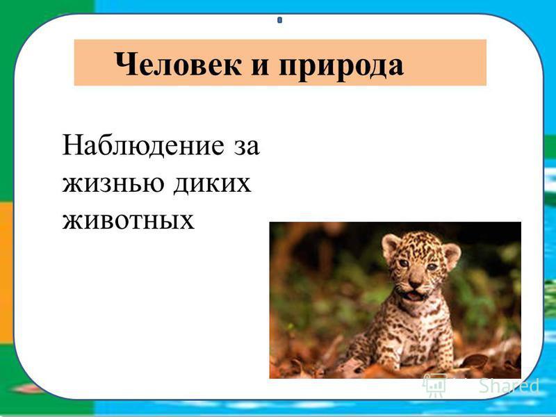Наблюдение за жизнью диких животных Человек и природа