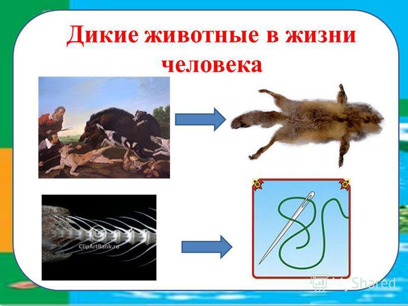 Дикие животные в жизни человека