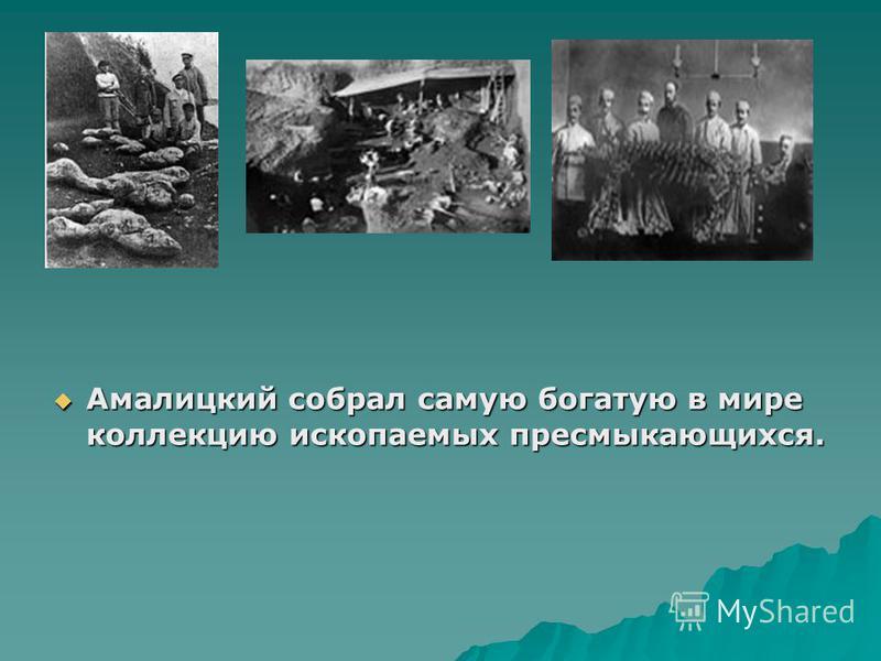 Амалицкий собрал самую богатую в мире коллекцию ископаемых пресмыкающихся. Амалицкий собрал самую богатую в мире коллекцию ископаемых пресмыкающихся.