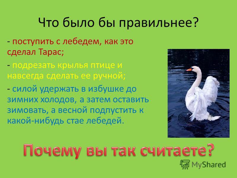 Что было бы правильнее? - поступить с лебедем, как это сделал Тарас; - подрезать крылья птице и навсегда сделать ее ручной; - силой удержать в избушке до зимних холодов, а затем оставить зимовать, а весной подпустить к какой-нибудь стае лебедей.