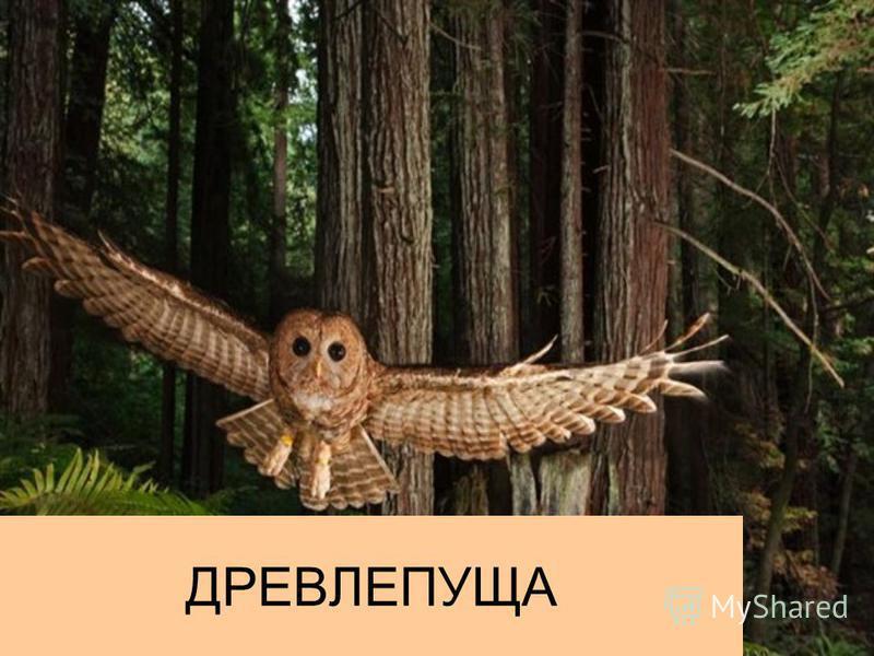 ДРЕВЛЕПУЩА