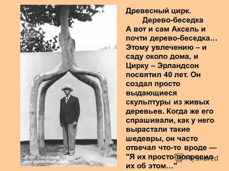 Древесный цирк. Дерево-беседка А вот и сам Аксель и почти дерево-беседка… Этому увлечению – и саду около дома, и Цирку – Эрландсон посвятил 40 лет. Он создал просто выдающиеся скульптуры из живых деревьев. Когда же его спрашивали, как у него вырастал