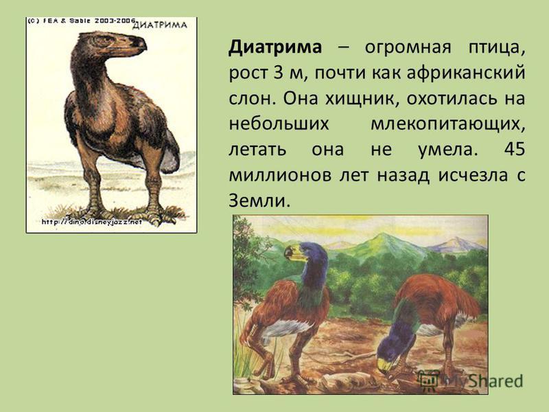 Диатрима – огромная птица, рост 3 м, почти как африканский слон. Она хищник, охотилась на небольших млекопитающих, летать она не умела. 45 миллионов лет назад исчезла с Земли.