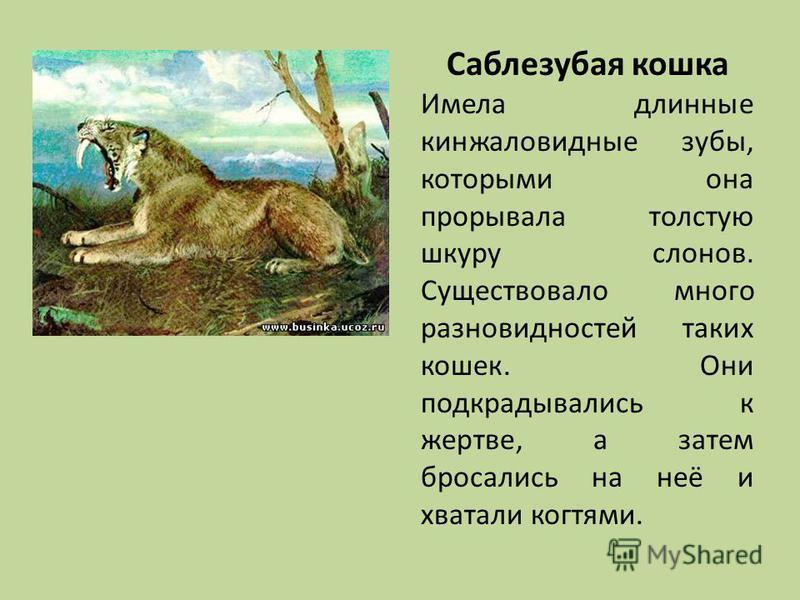 Саблезубая кошка Имела длинные кинжаловидные зубы, которыми она прорывала толстую шкуру слонов. Существовало много разновидностей таких кошек. Они подкрадывались к жертве, а затем бросались на неё и хватали когтями.