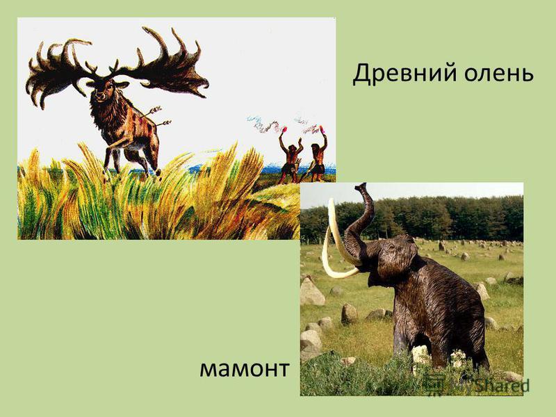 Древний олень мамонт