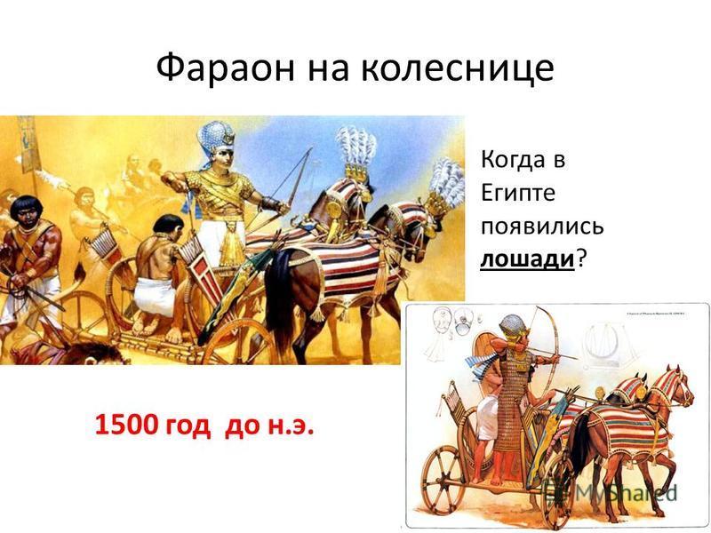 Фараон на колеснице Когда в Египте появились лошади? 1500 год до н.э.