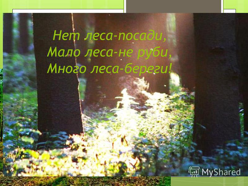 Нет леса-посади, Мало леса-не руби, Много леса-береги!