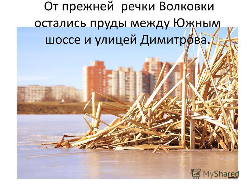От прежней речки Волковки остались пруды между Южным шоссе и улицей Димитрова.