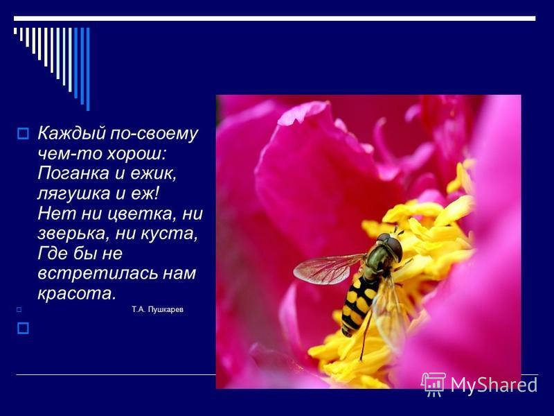 Каждый по-своему чем-то хорош: Поганка и ежик, лягушка и еж! Нет ни цветка, ни зверька, ни куста, Где бы не встретилась нам красота. Т.А. Пушкарев