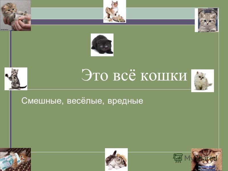 Это всё кошки Смешные, весёлые, вредные